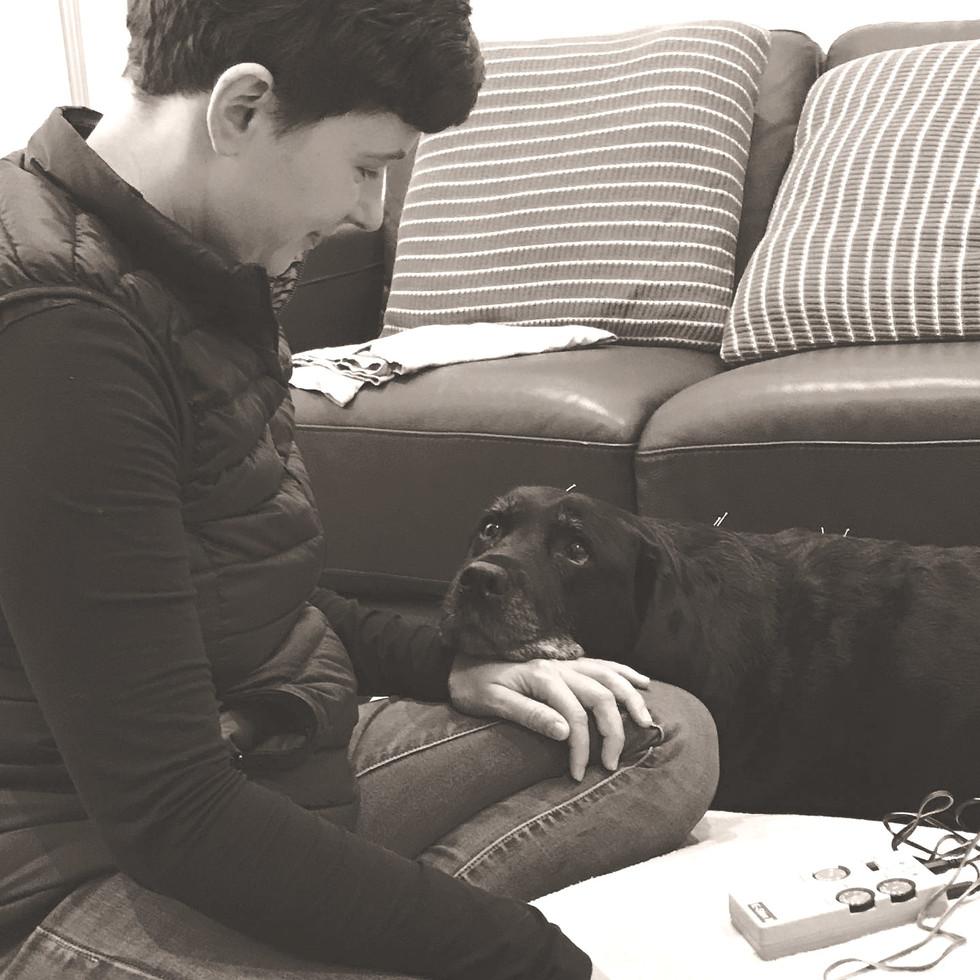 Dog Acupuncture Melbourne
