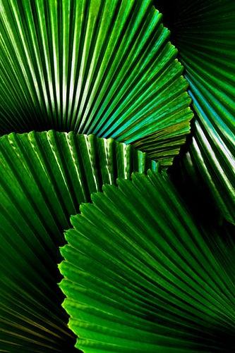 foliage Wellness