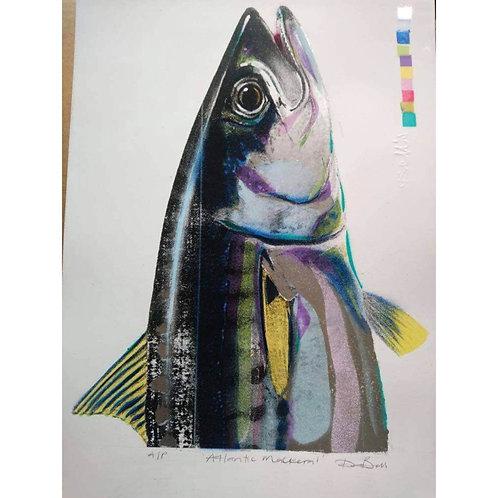 Atlantic Mackerel (Dylan Bell)