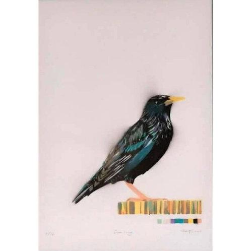 Starling (Dylan Bell)
