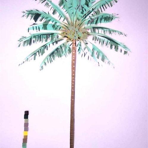 Cocos Nucifera (Coconut Palm) - (Dylan Bell)