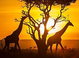kenya-safari.jpg