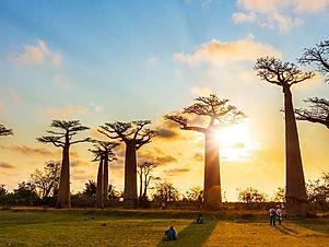 MADAGASCAR..jpg