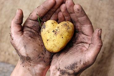 Kartoffelherz