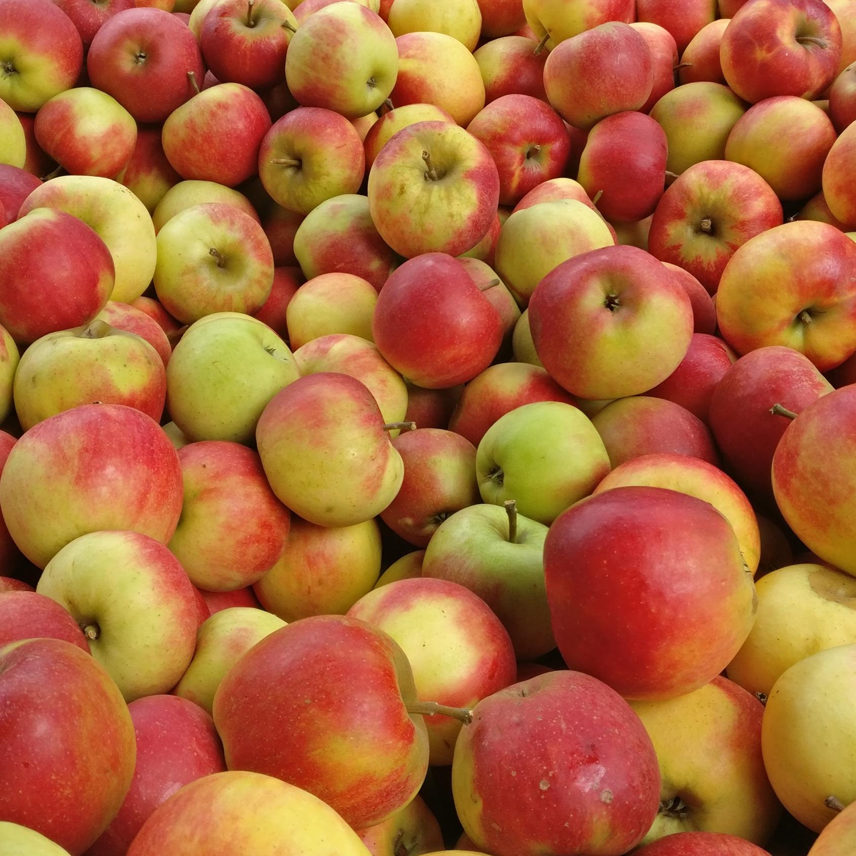 Äpfel, versch. Sorten