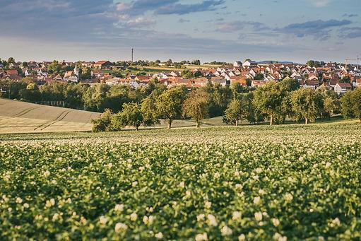 Kartoffel_Panorama_WeilerzumStein