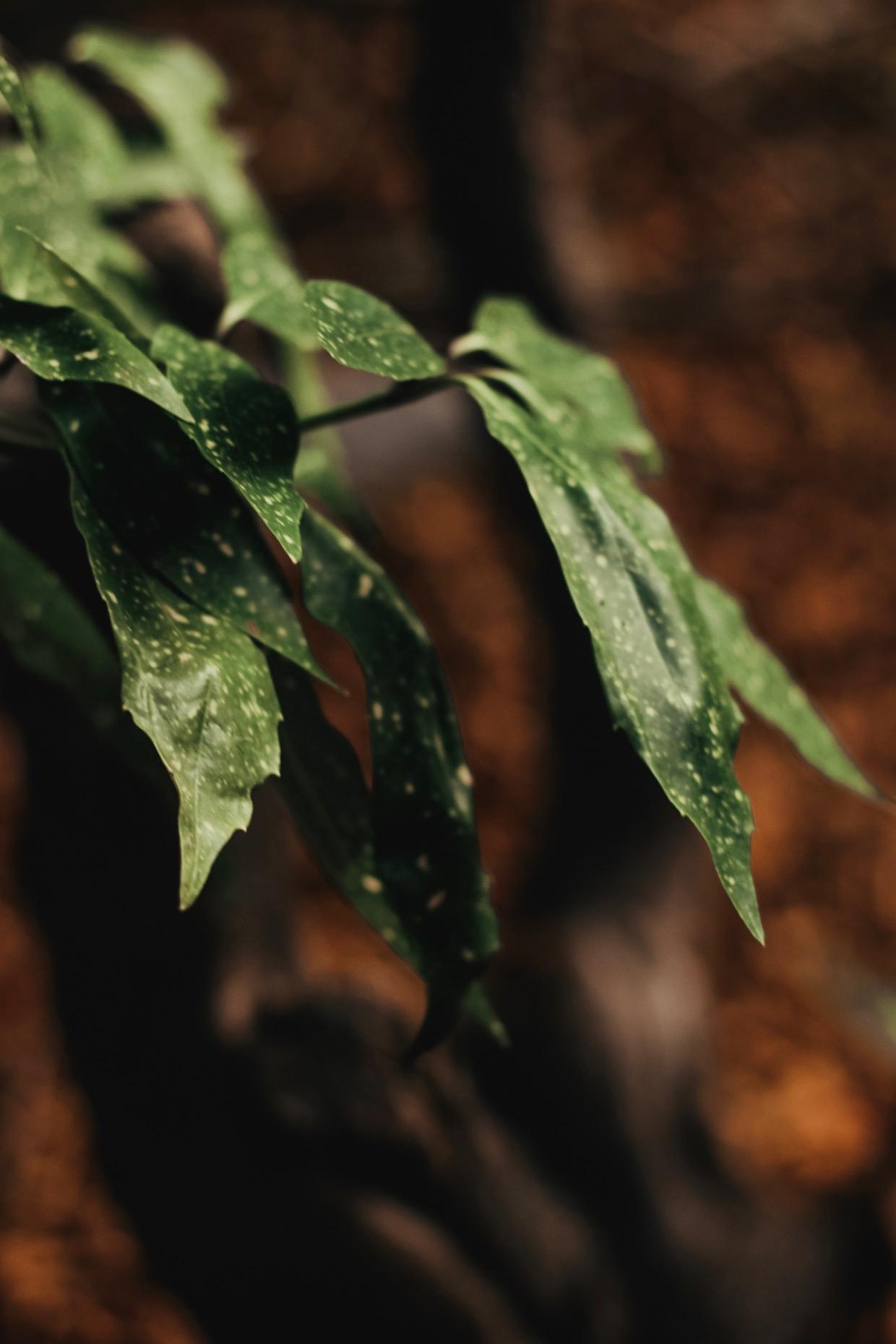 leaf - Opal Sky.jpeg