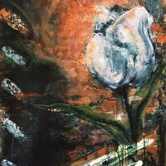 #1906 - White Tulip #2