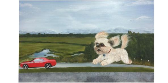 #1809 - Ollie - Superdog