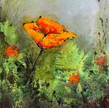 Solitude - Californian Poppy