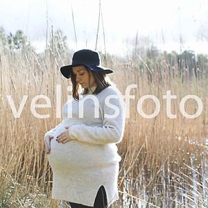 4. Lovisa gravidis