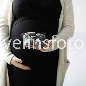 Lovisa gravidis