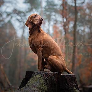 Oak and Huxley