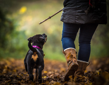 rottweiler puppy and owner