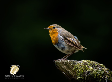A little birdy wins me a precious award