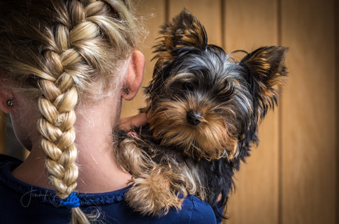 Yorkie pup with child