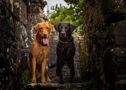 Hounds and history