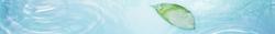 slim-banner-leaf-2