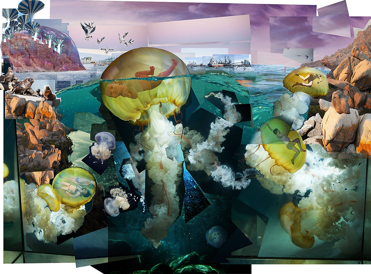 T.dohrnii Ships, jellyfish, giant jellyfish, hydrozoa, Mar Chileno, Chile, Turritopsis dohrnii, immortal jellyfish, fate