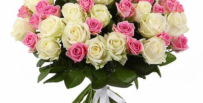 50 stem of pink and white roses