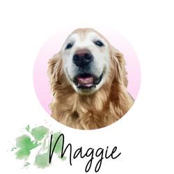 Maggie (aka Schmieg) - from The Golden Ratio