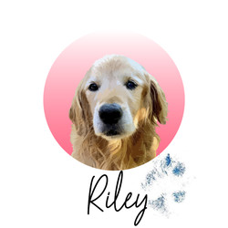 Riley - from The Golden Ratio