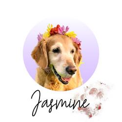 Jasmine - from The Golden Ratio