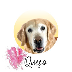 Queso - from The Golden Ratio