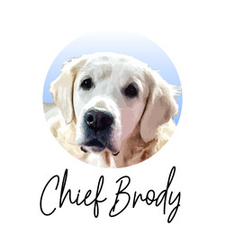 Chief Brody - from The Golden Ratio