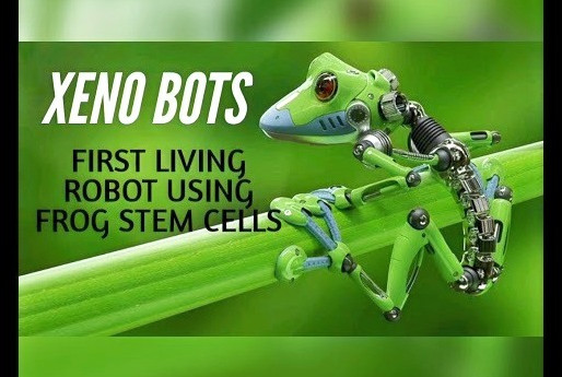 "World's First ""Living Machine"":  Designed Using Artificial Intelligence And Frog Cells"