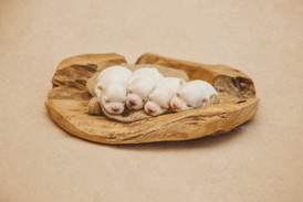 puppiesnewborn-27.jpg
