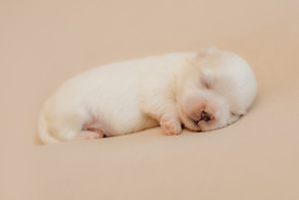puppiesnewborn-17.jpg