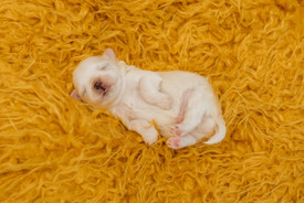 puppiesnewborn-39.jpg