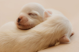 puppiesnewborn-9.jpg