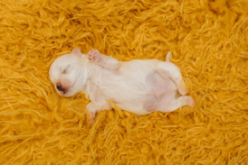 puppiesnewborn-38.jpg