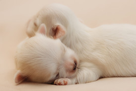 puppiesnewborn-10.jpg