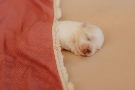 puppiesnewborn-20.jpg