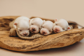 puppiesnewborn-29.jpg