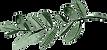 eucalyptus_edited.png