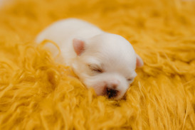 puppiesnewborn-44.jpg