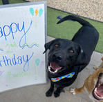 Happy 2nd Birthday Barkley