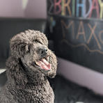 Max's Birthday!