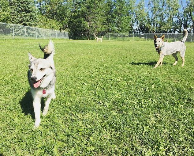 Luna & Ellie