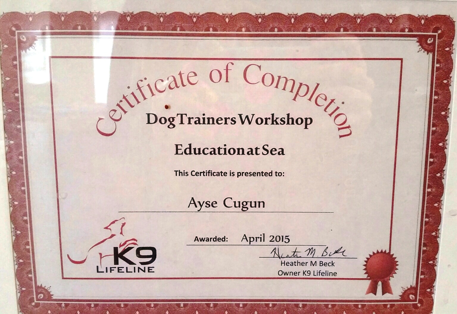 ayse at sea certificate