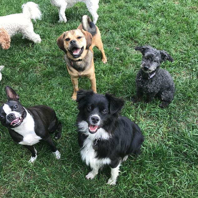 Flux, Dexter, Leia, & Max