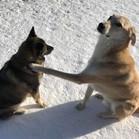 Ryuu & Roscoe