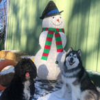 Happy Holidays - Pepper & Zeus