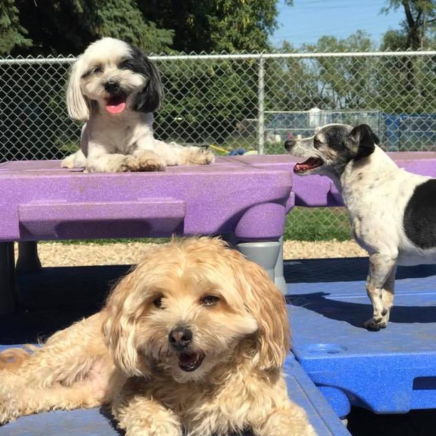 Bella, Koda, & Herbie