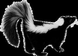 skunk_PNG4.png