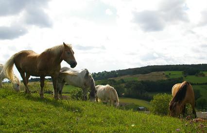 Promenades à cheval à la jumenterie de Jenzat ou au domaine de la Serre